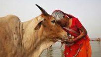 গরুকে জাতীয় পশু ঘোষণার পরামর্শ আদালতের