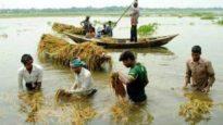 স্বপ্নভাঙা কৃষকদের জন্য ব্র্যাকের ১৫ কোটি টাকার ত্রাণ