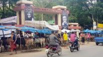 এমসি কলেজ গেইট ও স্মৃতি স্তম্ভে গরুর হাট